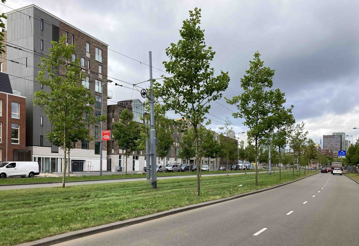 Overtuin     Rotterdam